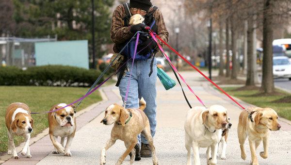 Смоляне выгуливают собак в центральном парке для отдыха