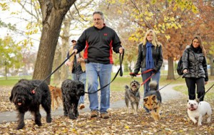 В Смоленске определили места для выгула собак