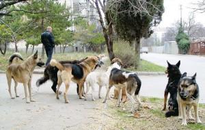 Собаки нападают на смолян!