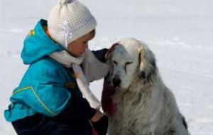 Депутаты выделили средства на пункт содержания безнадзорных животных