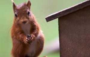 В центральном парке повесят скворечники с белками