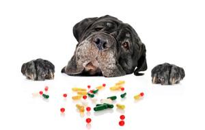 Первая помощь при отравлении собаки