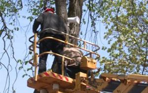 В смоленском парке Блонье установили отпугиватели для ворон