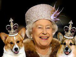 Британская королевская собака станет героем детской книги