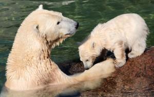 Петербуржцы выбрали место для нового зоопарка