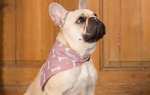 Модный шейный платок для собаки