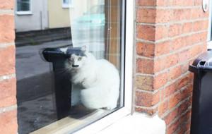 На похожего на Гитлера кота напали на улице