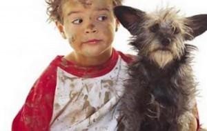 Медики: кошки и собаки переносят больничные бактерии