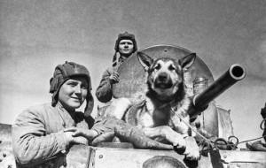 Животные-герои войны