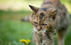 Умерла самая старая кошка в мире