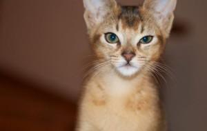 Интересные Факты О кошках…