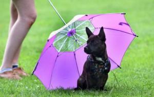 Зонтик для собак: спасение в любую погоду