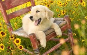 5 вещей для собаки загородом и в отпуске