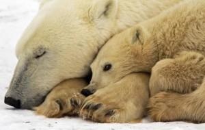 Зафиксирован увеличивающийся темп вымирания животных