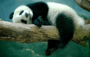 Удивительные факты из мира животных
