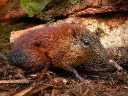 Неизвестный вид млекопитающих обнаружен в Намибии