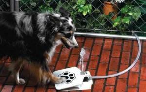 Дачный вариант поилки для собак