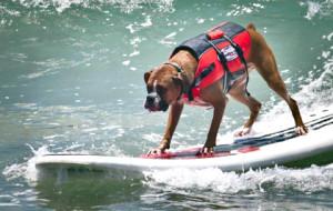 В Калифорнии прошел ежегодный чемпионат по серфингу для собак