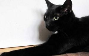 Кот вывел хозяйку из комы