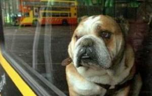 В Гонконге появился автобус для пассажиров с собаками