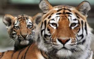 На Земле началось шестое великое вымирание животных