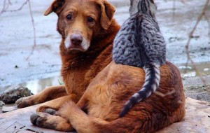 Смоляне помогли бездомным животным