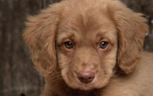 В Америке учредили премию «Лучшая в мире собака»