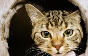 Спасший ребенка кот стал номинантом британской премии
