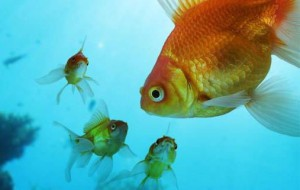 Рыбы способны проявлять чувства