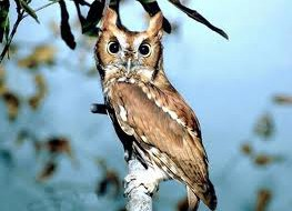 Где у птиц уши
