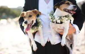 Новая свадебная традиция