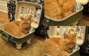 Спальное место для любимого кота