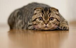 Дистанционная игрушка для кошек