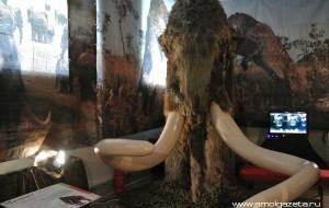 В Смоленске поселились мамонт и саблезубый кот