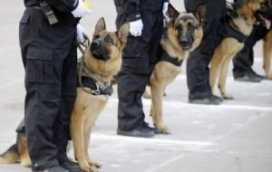 Южная Корея клонирует служебных собак
