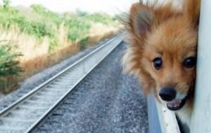 Новые правила перевозки животных в поездах