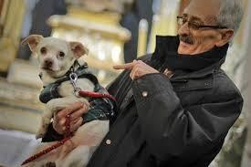 Эксперимент на собаках доказал биологическую природу ревности