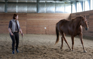 Шевеление ушами оказалось средством коммуникации лошадей