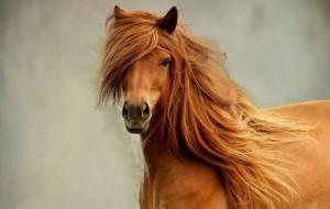 В России отметили День лошади