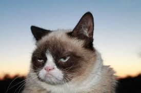 В России появится книга о Grumpy Cat