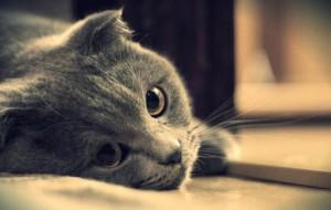Каждый третий кот с диагнозом МКБ погибает