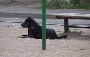 Смоляне подвергаются нападению бездомных собак