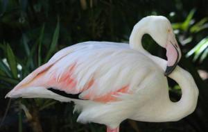 Скончался самый старый фламинго в мире