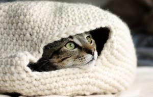 Вязаное спасение от холода