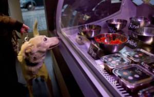 В Германии открылся ресторан для животных
