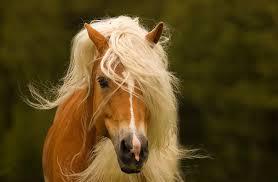 Модная лошадь