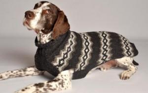 Стильный свитер для питомца