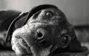 Изменения в поведении у взрослых собак