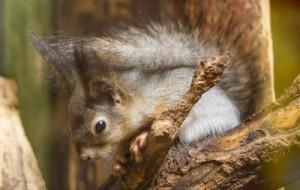 В Смоленском зоопарке отпразднуют Международный день белок