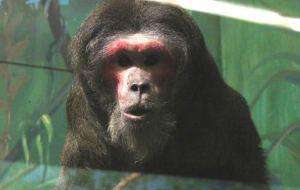 Животные не дождались нового зоопарка в Смоленске